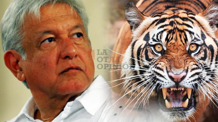 Resultado de imagen para el tigre lopez obrador